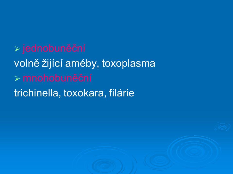 """Volně žijící améby   kosmopolitní   termotolerantní   """"dvojí život   vlhká půda, stojaté vody, umělé vodní nádrže   patogenní pro člověka: Naegleria fowleri Acanthamoeba spp."""