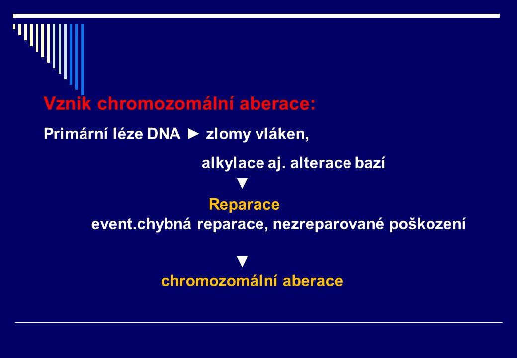 Cytogenetická metoda - sledování frekvence chromozomálních aberací v kostní dřeni exp. zvířete