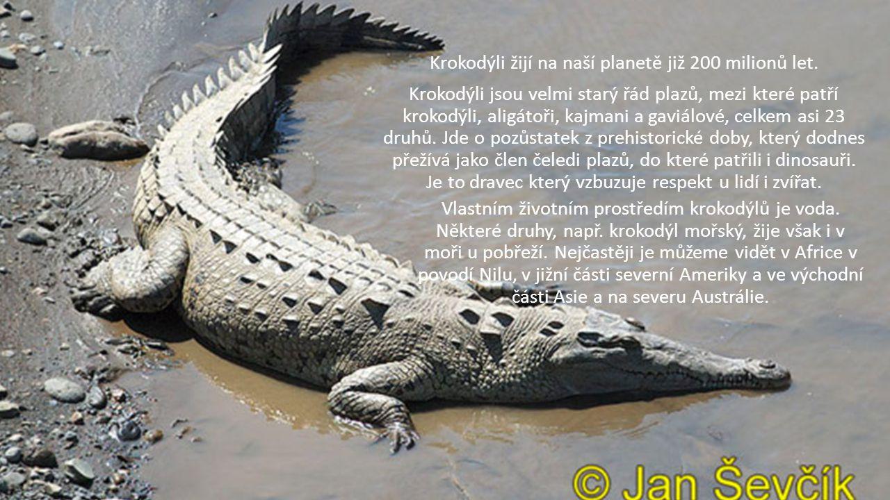 Krokodýli žijí na naší planetě již 200 milionů let. Krokodýli jsou velmi starý řád plazů, mezi které patří krokodýli, aligátoři, kajmani a gaviálové,