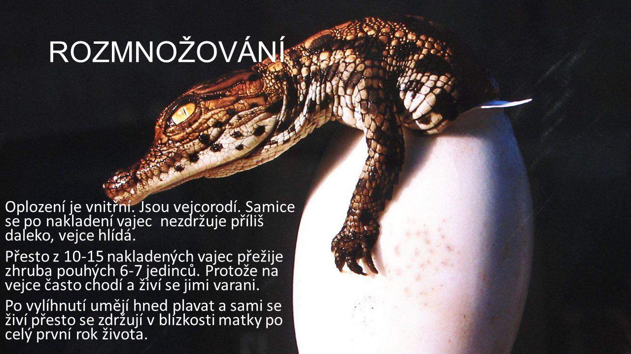 DĚLENÍ Krokodýli — zub dole zapadá do rýhy nahoře (viditelné i v zavřené tlamě) Aligátoři a Kajmani — zub dole není vidět, zapadá do jamky Gaviálové — úzký, dlouhý čenich se zduřinou