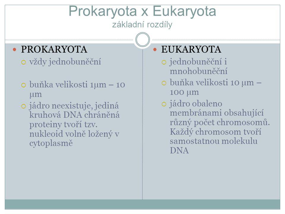 Prokaryota x Eukaryota základní rozdíly PROKARYOTA  vždy jednobuněční  buňka velikosti 1μm – 10 μm  jádro neexistuje, jediná kruhová DNA chráněná p
