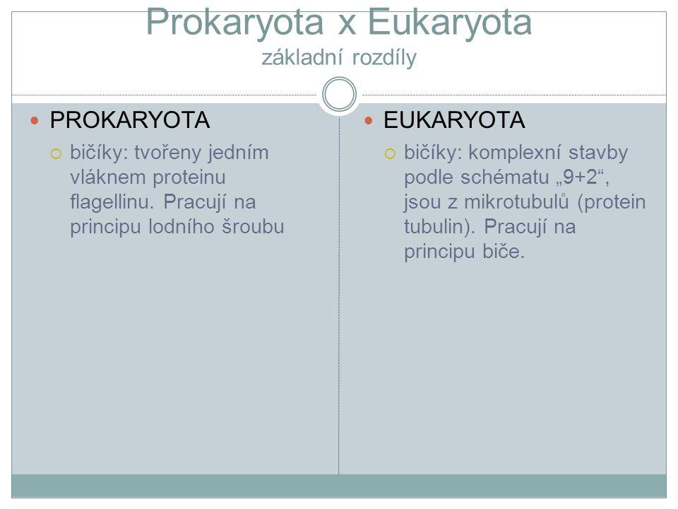 Prokaryota x Eukaryota základní rozdíly PROKARYOTA  bičíky: tvořeny jedním vláknem proteinu flagellinu. Pracují na principu lodního šroubu EUKARYOTA