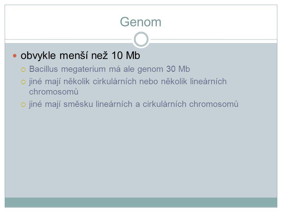 Genom obvykle menší než 10 Mb  Bacillus megaterium má ale genom 30 Mb  jiné mají několik cirkulárních nebo několik lineárních chromosomů  jiné mají