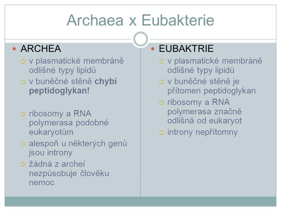 Archaea x Eubakterie ARCHEA  v plasmatické membráně odlišné typy lipidů  v buněčné stěně chybí peptidoglykan!  ribosomy a RNA polymerasa podobné eu