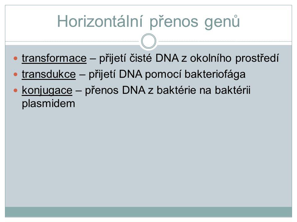 Horizontální přenos genů transformace – přijetí čisté DNA z okolního prostředí transdukce – přijetí DNA pomocí bakteriofága konjugace – přenos DNA z b