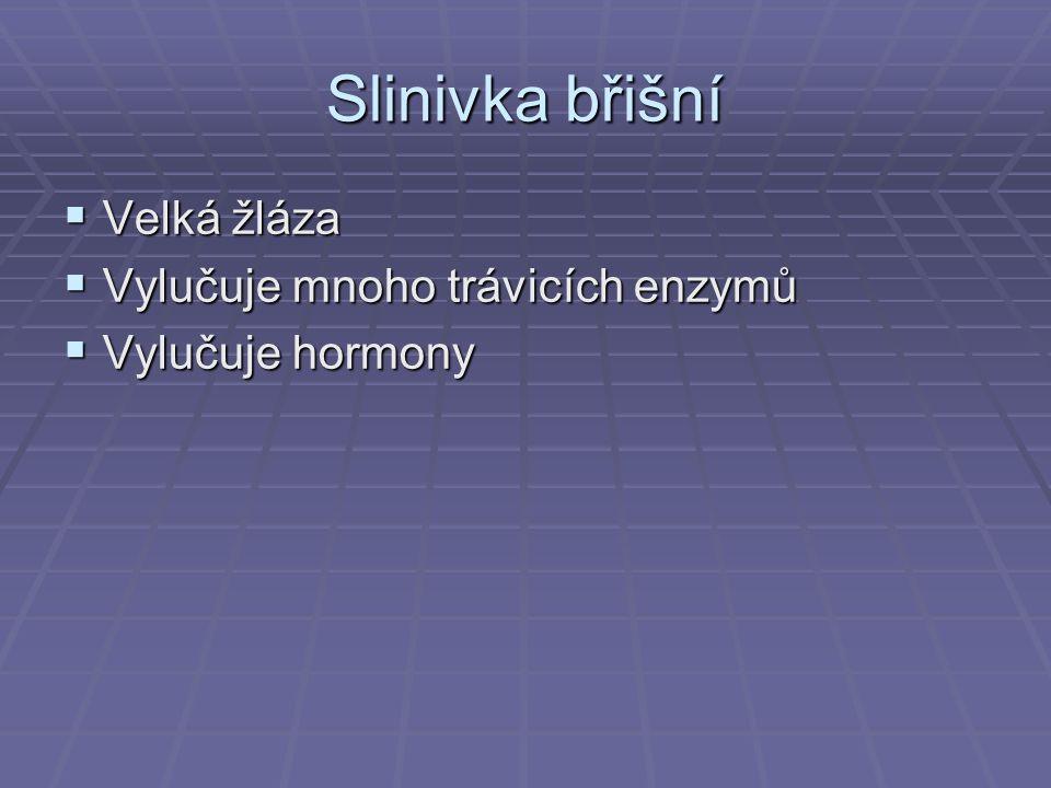 Slinivka břišní  Velká žláza  Vylučuje mnoho trávicích enzymů  Vylučuje hormony
