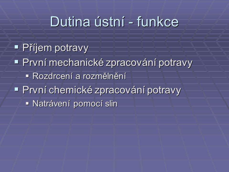 Dutina ústní - jazyk  Svalnatý orgán  Vyztužený jazylkou  Chuťové buňky  Mluvení  Mechanické zpracování potravy