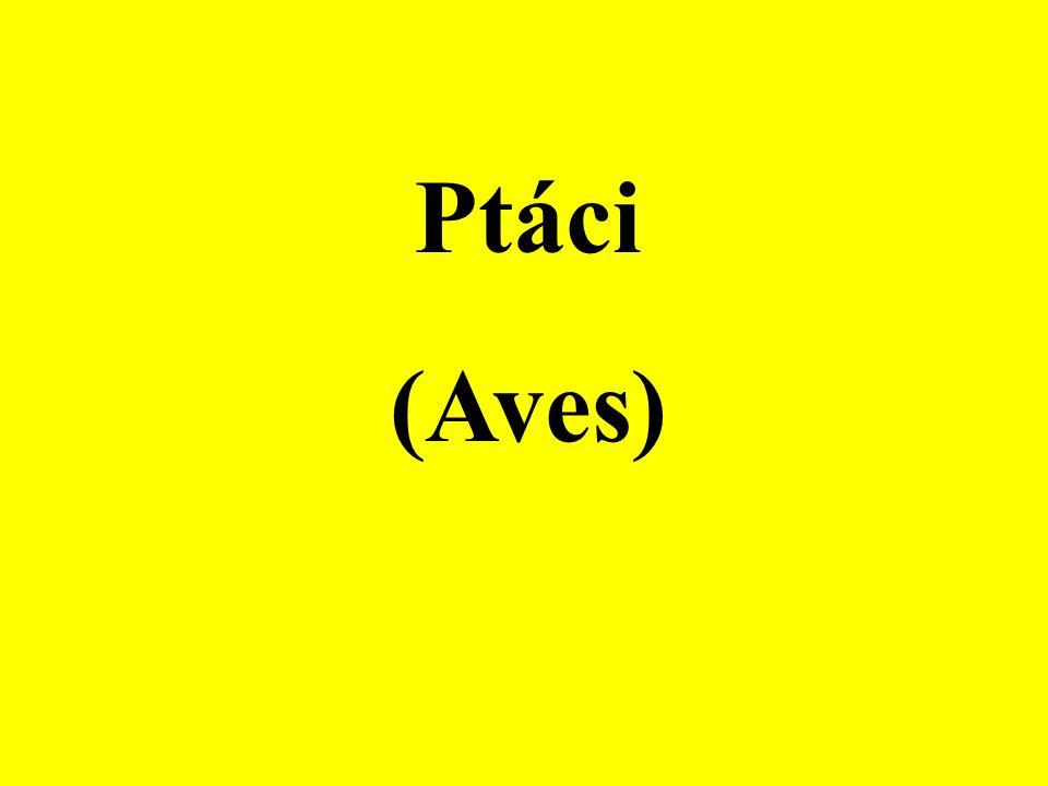 Řád: Vrubozobí (Anseriformes) Polák velký (Aythya ferina)Polák chocholačka (Aythya fuligula) Morčák velký (Mergus merganser)