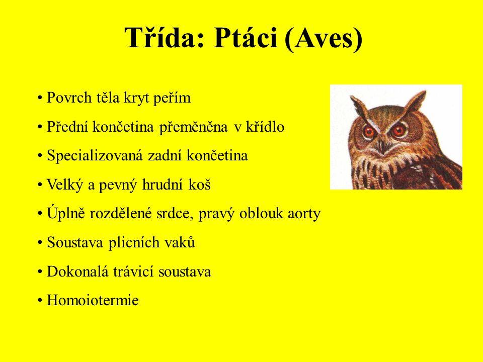 Řád: Pěvci (Passeriformes) Drozdovití (Turdidae) Kos černý (Turdus merula) Drozd kvíčala (Turdus pilaris) Drozd zpěvný (Turdus philomelos) Drozd brávník (Turdus viscivorus) Kos horský (Turdus torquatus)