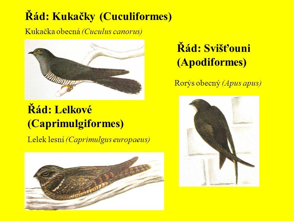 Řád: Kukačky (Cuculiformes) Kukačka obecná (Cuculus canorus) Řád: Lelkové (Caprimulgiformes) Lelek lesní (Caprimulgus europaeus) Řád: Svišťouni (Apodi