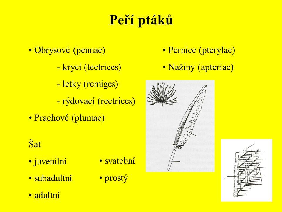 Řád: Pěvci (Passeriformes) Skorcovití (Cinclidae) Skorec vodní (Cinclus cinclus) Pěnicovití (Sylviidae) Rákosník velký (Acrocephalus arundinaceus) Pěnice černohlavá (Sylvia atricapilla) Králíček obecný (Regulus regulus) Králíčkovití (Regulidae)