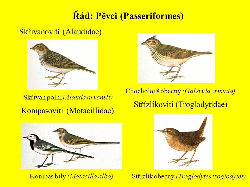 Řád: Pěvci (Passeriformes) Skřivanovití (Alaudidae) Skřivan polní (Alauda arvensis) Chocholouš obecný (Galerida cristata) Konipasovití (Motacillidae)