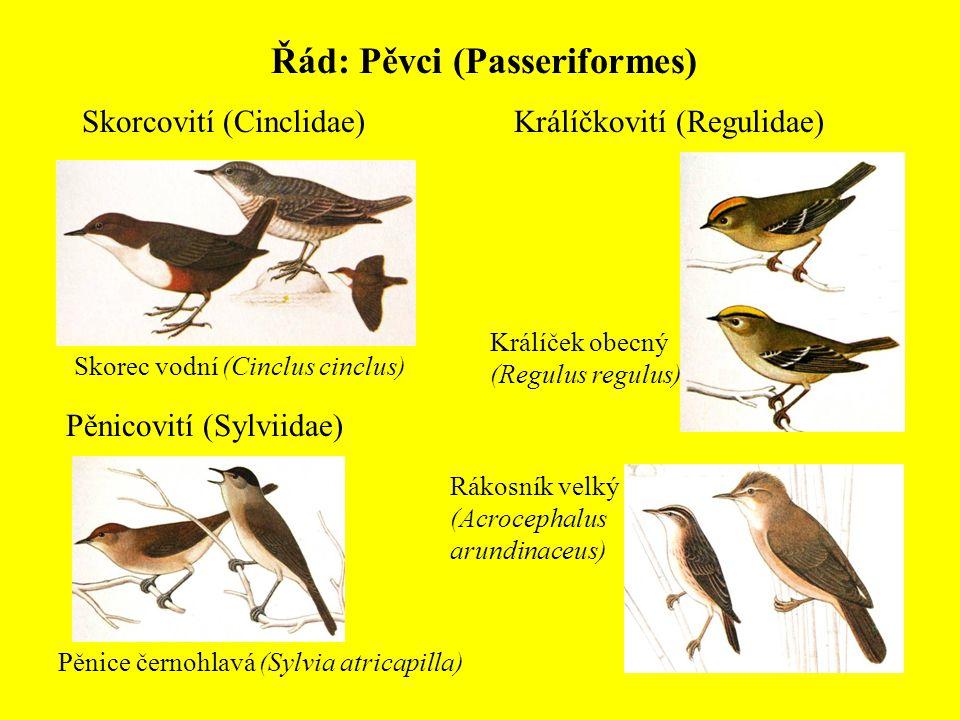 Řád: Pěvci (Passeriformes) Skorcovití (Cinclidae) Skorec vodní (Cinclus cinclus) Pěnicovití (Sylviidae) Rákosník velký (Acrocephalus arundinaceus) Pěn