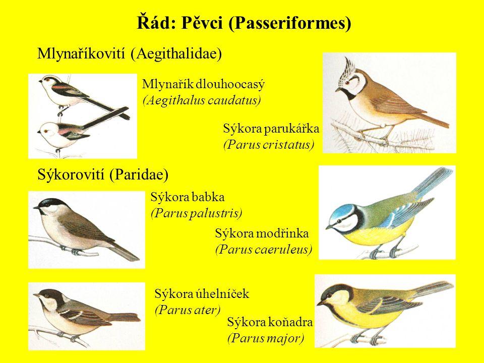 Řád: Pěvci (Passeriformes) Mlynaříkovití (Aegithalidae) Mlynařík dlouhoocasý (Aegithalus caudatus) Sýkorovití (Paridae) Sýkora babka (Parus palustris)