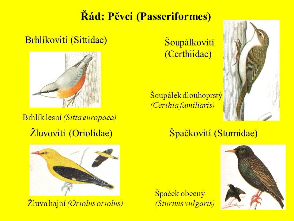 Řád: Pěvci (Passeriformes) Brhlíkovití (Sittidae) Brhlík lesní (Sitta europaea) Šoupálkovití (Certhiidae) Šoupálek dlouhoprstý (Certhia familiaris) Žl