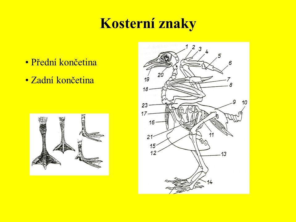 Řád: Pěvci (Passeriformes) Mlynaříkovití (Aegithalidae) Mlynařík dlouhoocasý (Aegithalus caudatus) Sýkorovití (Paridae) Sýkora babka (Parus palustris) Sýkora parukářka (Parus cristatus) Sýkora úhelníček (Parus ater) Sýkora modřinka (Parus caeruleus) Sýkora koňadra (Parus major)