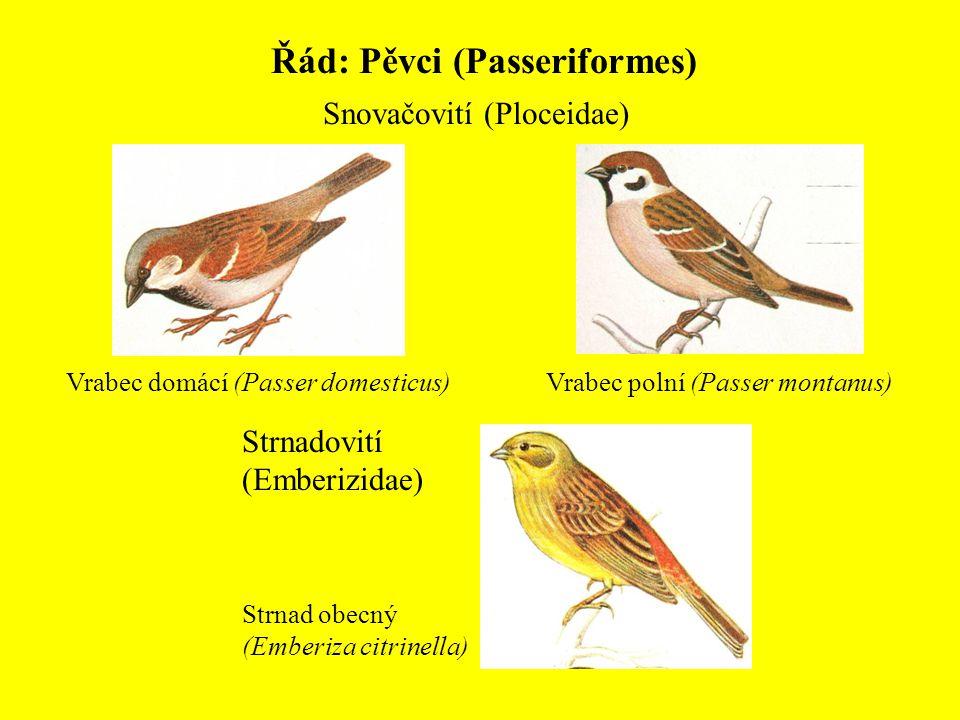 Řád: Pěvci (Passeriformes) Snovačovití (Ploceidae) Vrabec domácí (Passer domesticus)Vrabec polní (Passer montanus) Strnadovití (Emberizidae) Strnad ob