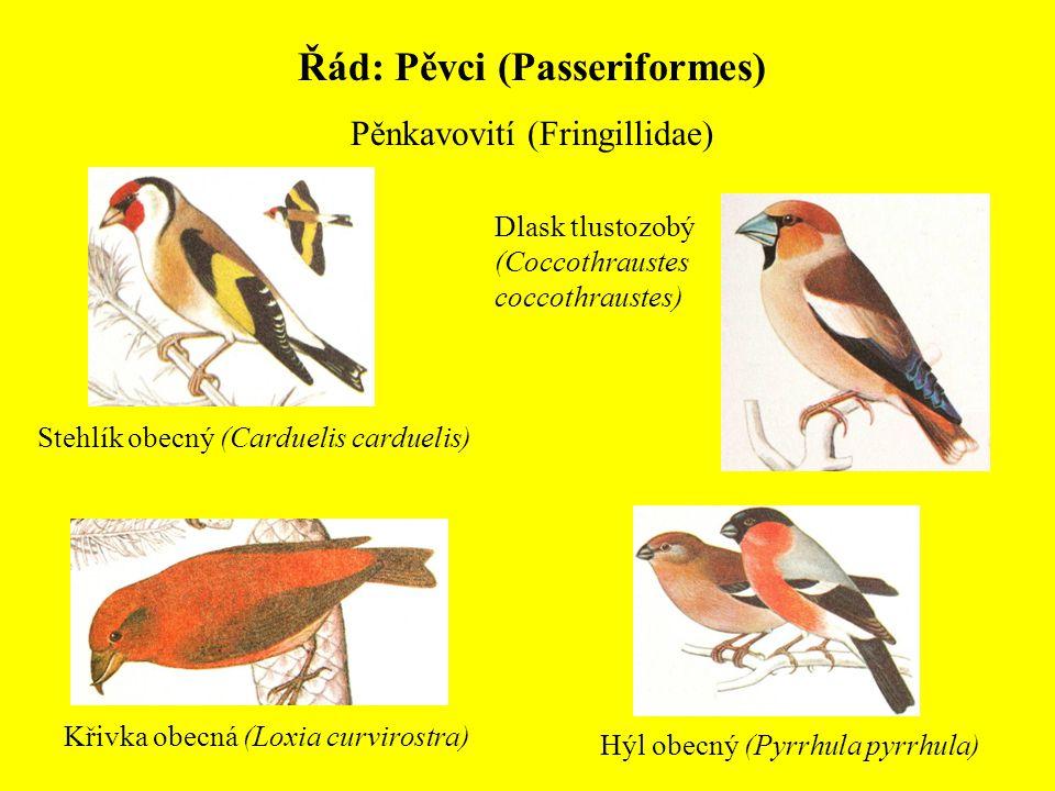 Řád: Pěvci (Passeriformes) Pěnkavovití (Fringillidae) Stehlík obecný (Carduelis carduelis) Křivka obecná (Loxia curvirostra) Hýl obecný (Pyrrhula pyrr