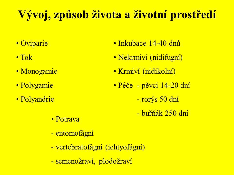 Vývoj, způsob života a životní prostředí Oviparie Tok Monogamie Polygamie Polyandrie Inkubace 14-40 dnů Nekrmiví (nidifugní) Krmiví (nidikolní) Péče-