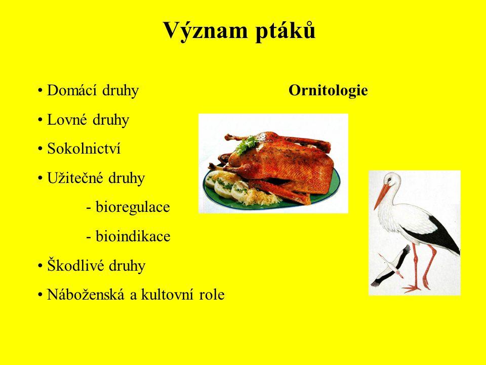 Řád: Dravci (Falconiformes) Čeleď: Krahujcovití (Accipitridae) Orel mořský (Haliaeetus albicilla) Orel křiklavý (Aquila pomarina) Orel skalní (Aquila chrysaetos) Orel královský (Aquila heliaca)