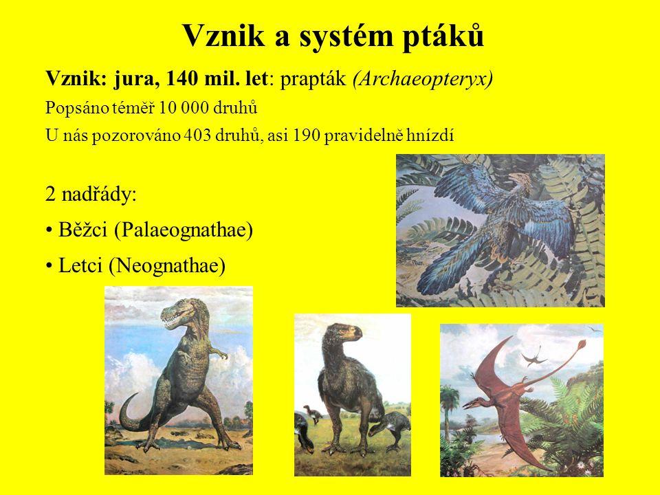 Vznik a systém ptáků Vznik: jura, 140 mil. let: prapták (Archaeopteryx) Popsáno téměř 10 000 druhů U nás pozorováno 403 druhů, asi 190 pravidelně hníz