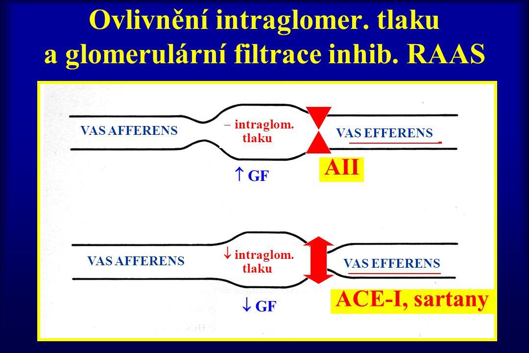 Ovlivnění intraglomer. tlaku a glomerulární filtrace inhib. RAAS VAS AFFERENS VAS EFFERENS  GF  intraglom. tlaku VAS AFFERENS VAS EFFERENS  GF  in