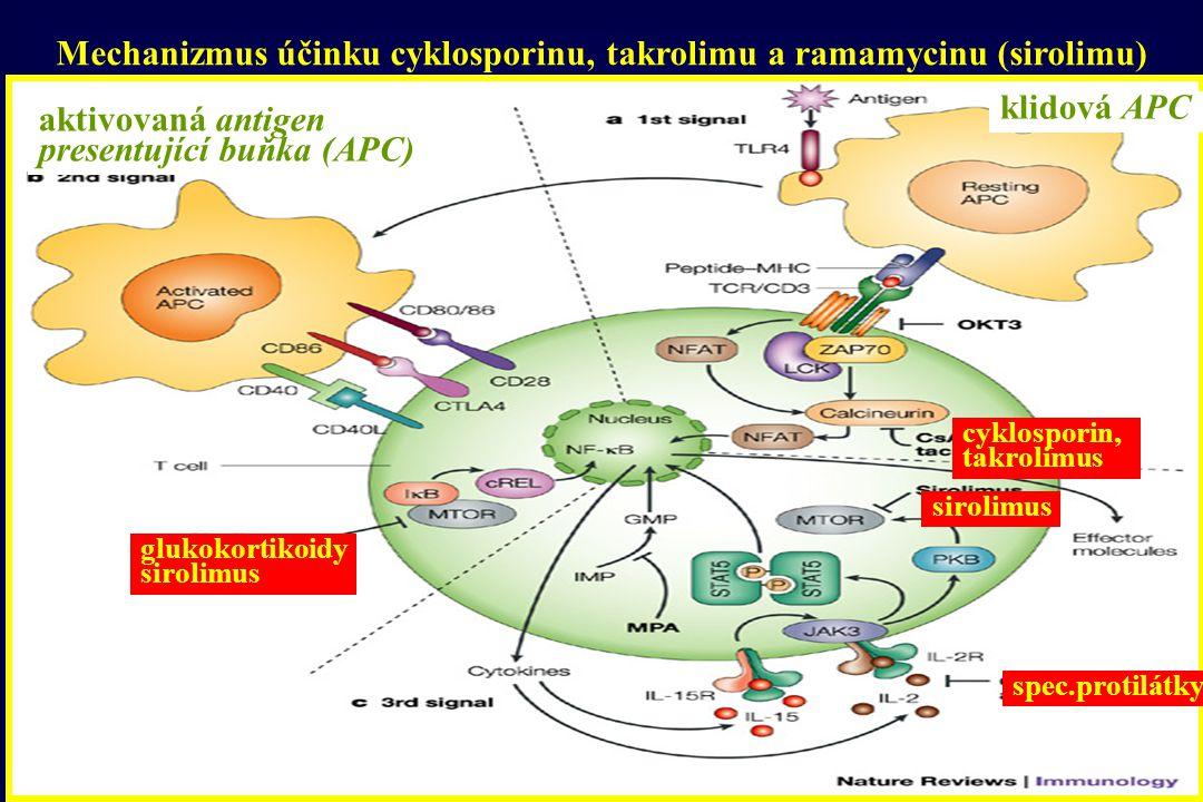 Mechanizmus účinku cyklosporinu, takrolimu a ramamycinu (sirolimu) cyklosporin, takrolimus sirolimus glukokortikoidy sirolimus spec.protilátky aktivov