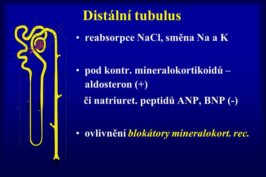 Distální tubulus reabsorpce NaCl, směna Na a K pod kontr. mineralokortikoidů – aldosteron (+) či natriuret. peptidů ANP, BNP (-) ovlivnění blokátory m