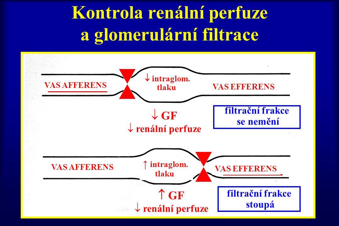 Kontrola renální perfuze a glomerulární filtrace filtrační frakce se nemění filtrační frakce stoupá VAS AFFERENS VAS EFFERENS VAS AFFERENS VAS EFFEREN