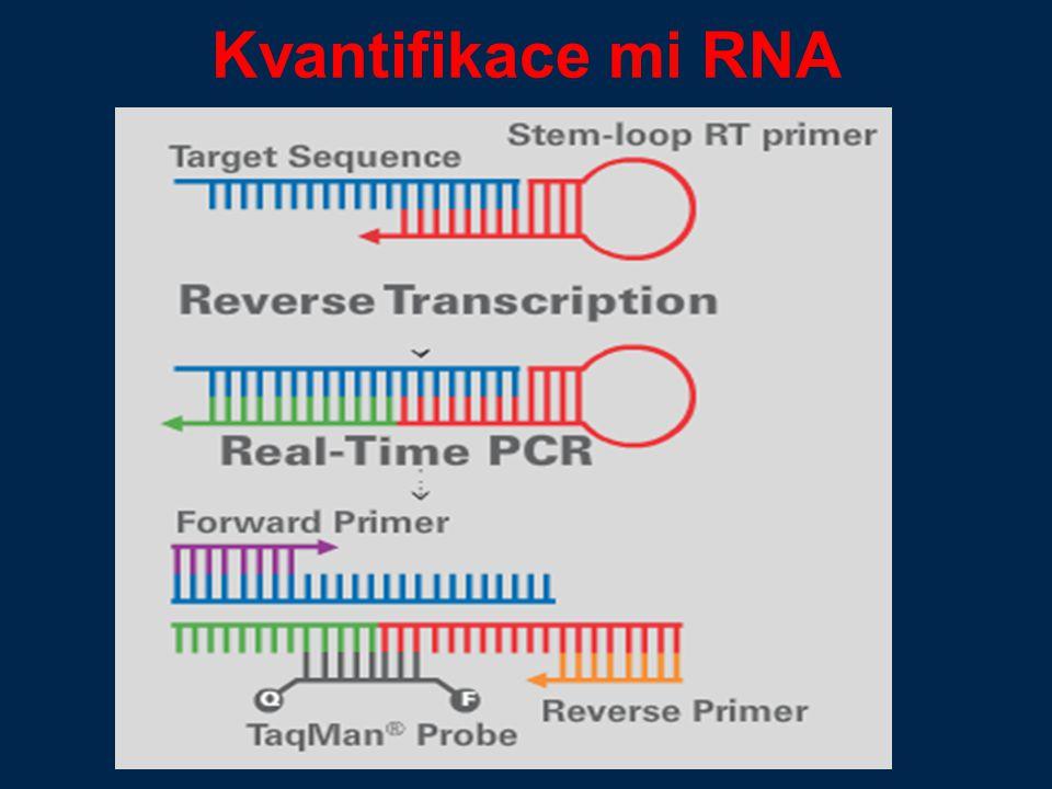 Kvantifikace mi RNA