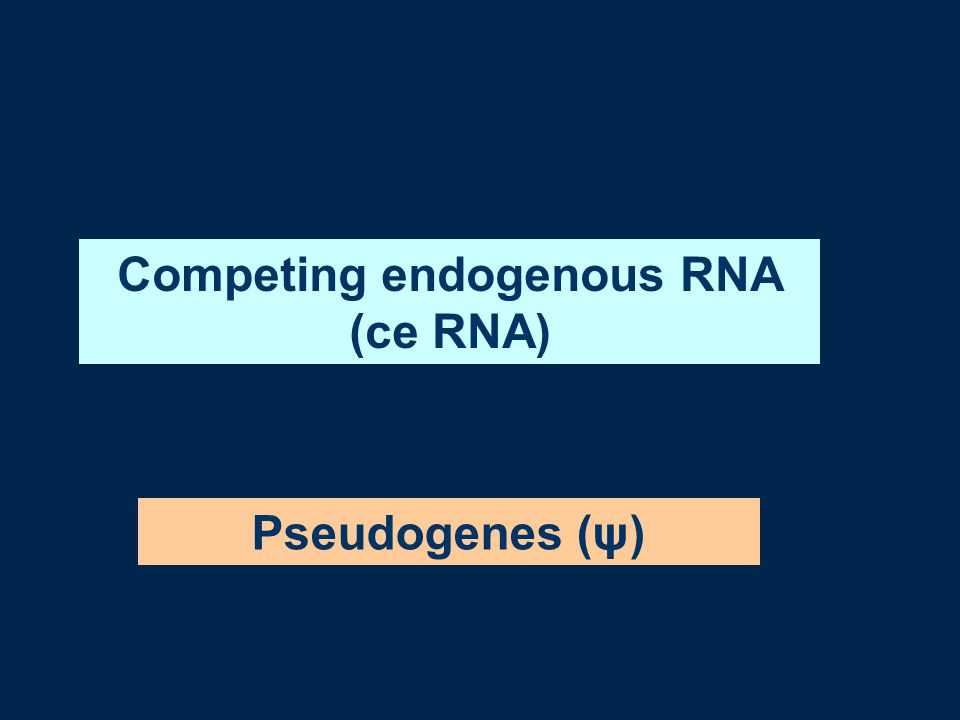 Competing endogenous RNA (ce RNA) Pseudogenes (ψ)