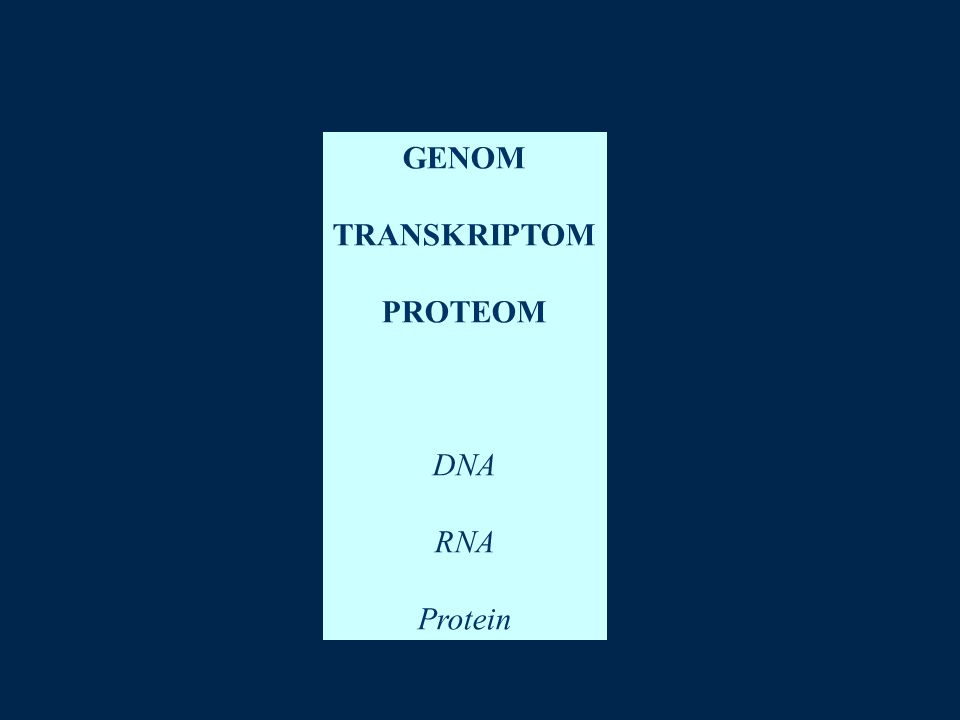 GENOM TRANSKRIPTOM PROTEOM DNA RNA Protein