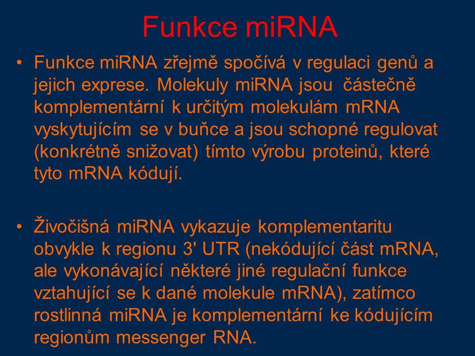 Funkce miRNA Funkce miRNA zřejmě spočívá v regulaci genů a jejich exprese.