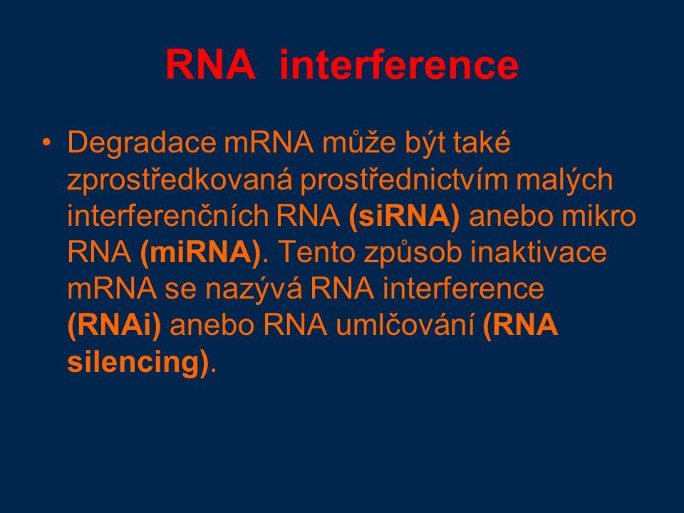 RNA interference Degradace mRNA může být také zprostředkovaná prostřednictvím malých interferenčních RNA (siRNA) anebo mikro RNA (miRNA).