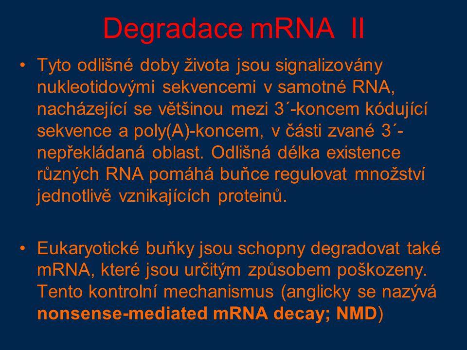 Degradace mRNA II Tyto odlišné doby života jsou signalizovány nukleotidovými sekvencemi v samotné RNA, nacházející se většinou mezi 3´-koncem kódující sekvence a poly(A)-koncem, v části zvané 3´- nepřekládaná oblast.