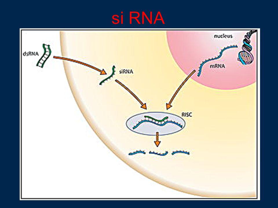 si RNA