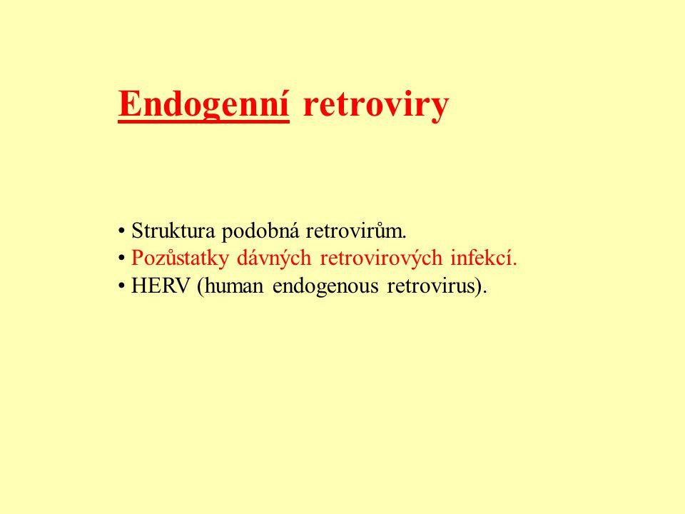 Endogenní retroviry Struktura podobná retrovirům.Pozůstatky dávných retrovirových infekcí.