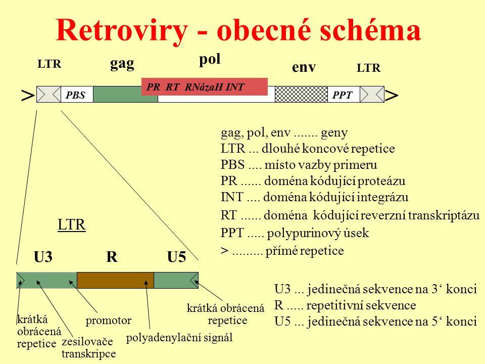 U3...jedinečná sekvence na 3' konci R..... repetitivní sekvence U5...