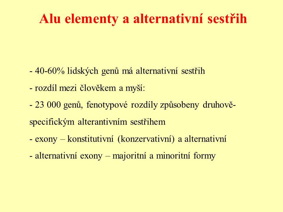 Alu elementy a alternativní sestřih - 40-60% lidských genů má alternativní sestřih - rozdíl mezi člověkem a myší: - 23 000 genů, fenotypové rozdíly způsobeny druhově- specifickým alterantivním sestřihem - exony – konstitutivní (konzervativní) a alternativní - alternativní exony – majoritní a minoritní formy