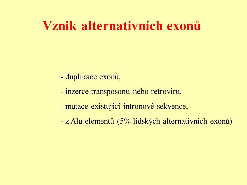 - duplikace exonů, - inzerce transposonu nebo retroviru, - mutace existující intronové sekvence, - z Alu elementů (5% lidských alternativních exonů) Vznik alternativních exonů