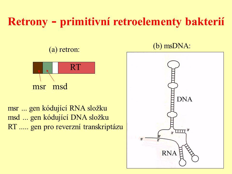 msrmsd msr...gen kódující RNA složku msd... gen kódující DNA složku RT.....