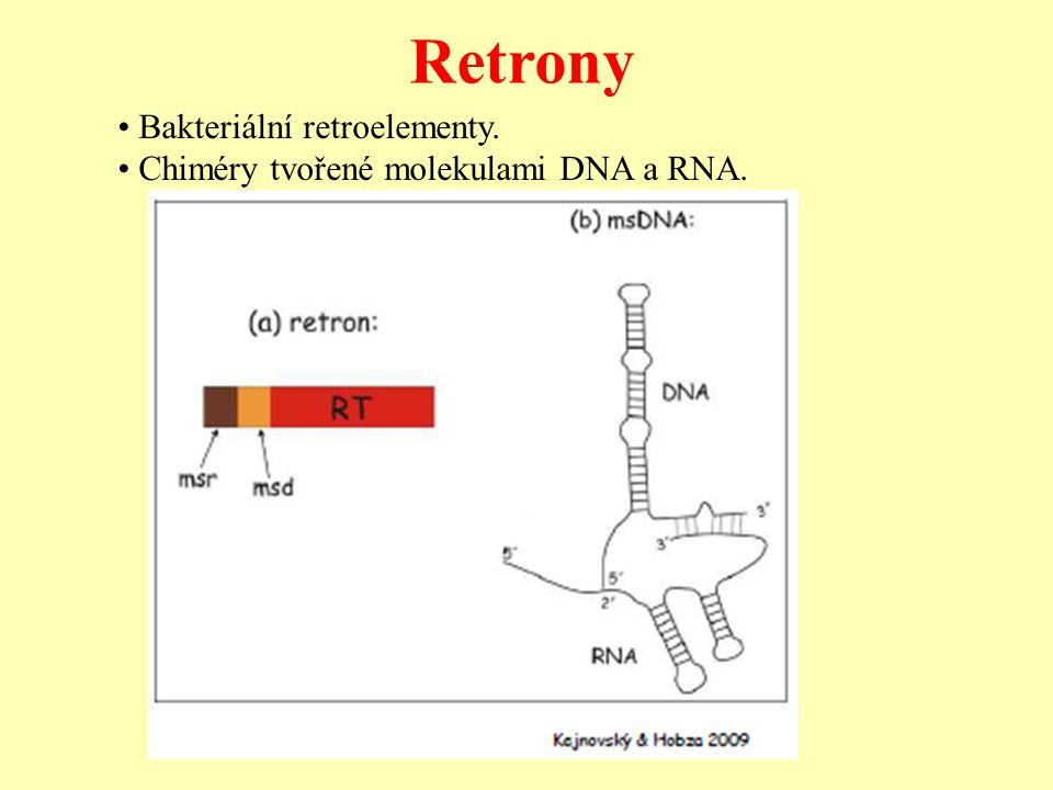 Retrony Bakteriální retroelementy. Chiméry tvořené molekulami DNA a RNA.