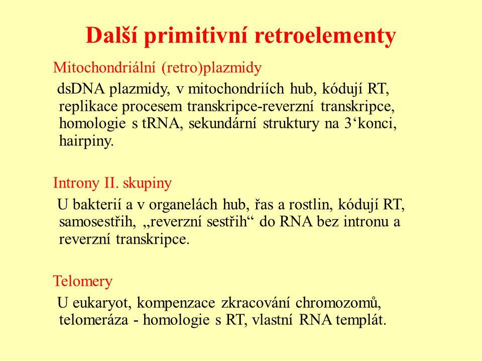 Další primitivní retroelementy Mitochondriální (retro)plazmidy dsDNA plazmidy, v mitochondriích hub, kódují RT, replikace procesem transkripce-reverzní transkripce, homologie s tRNA, sekundární struktury na 3'konci, hairpiny.
