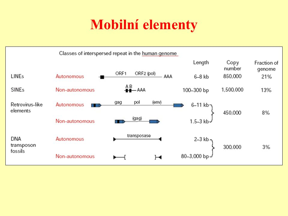 Mobilní elementy