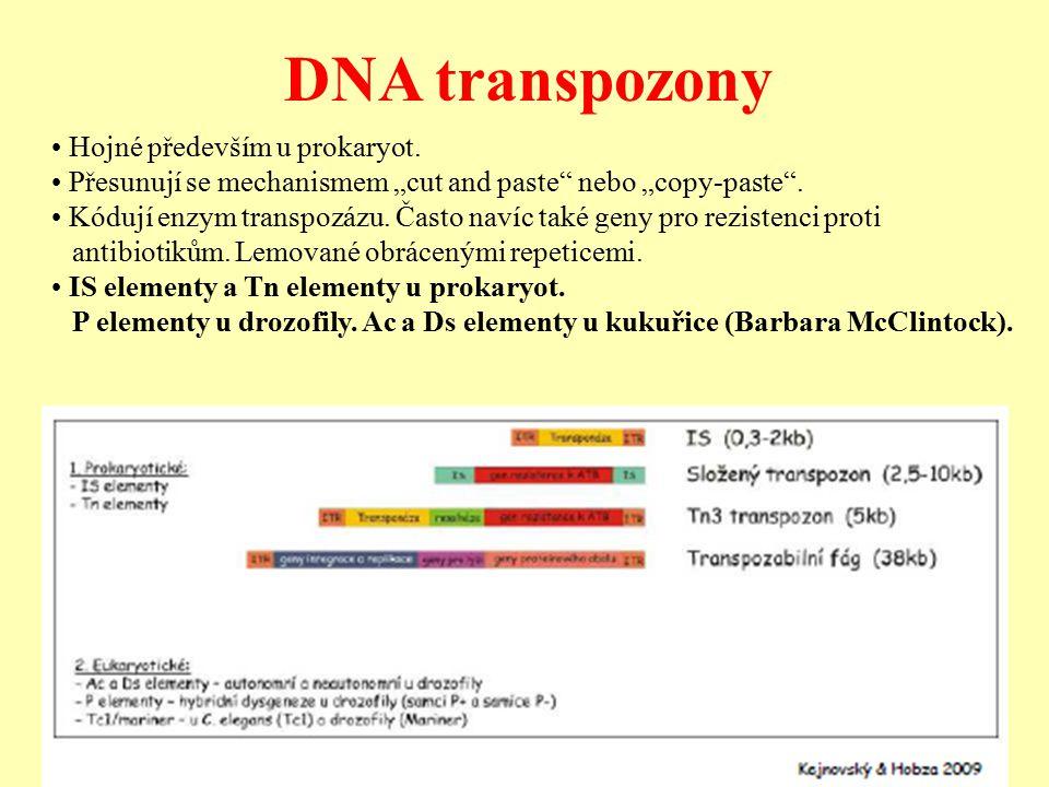 DNA transpozony Hojné především u prokaryot.