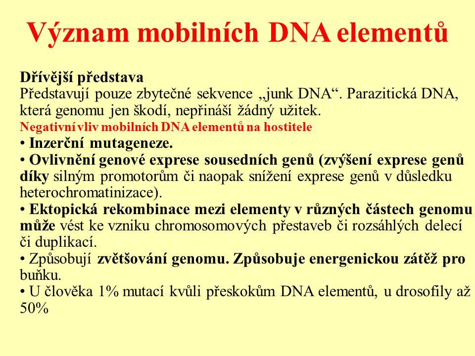 """Význam mobilních DNA elementů Dřívější představa Představují pouze zbytečné sekvence """"junk DNA ."""