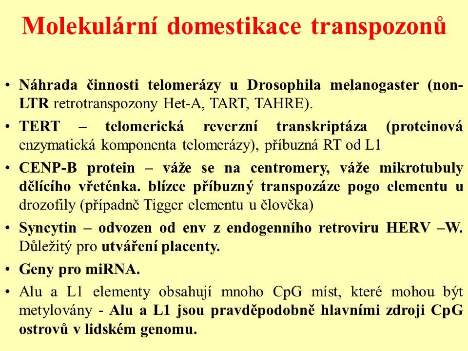 Molekulární domestikace transpozonů Náhrada činnosti telomerázy u Drosophila melanogaster (non- LTR retrotranspozony Het-A, TART, TAHRE).