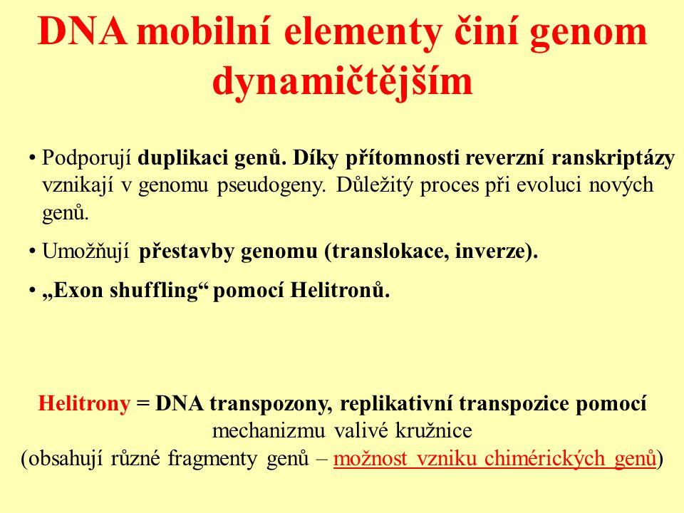 DNA mobilní elementy činí genom dynamičtějším Podporují duplikaci genů.