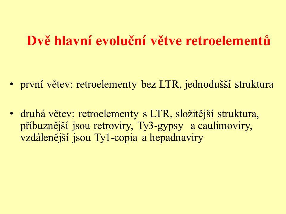 Dvě hlavní evoluční větve retroelementů první větev: retroelementy bez LTR, jednodušší struktura druhá větev: retroelementy s LTR, složitější struktura, příbuznější jsou retroviry, Ty3-gypsy a caulimoviry, vzdálenější jsou Ty1-copia a hepadnaviry