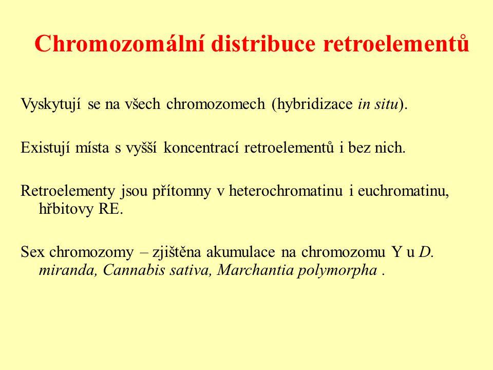 Vyskytují se na všech chromozomech (hybridizace in situ).